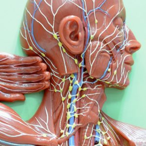 Manual Lymphatic Drainage Video Series (Video Download)